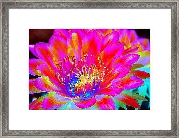 Psychedelic Pink Flower Framed Print