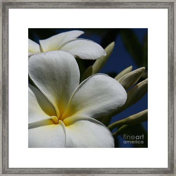 Pua Lena Pua Lei Aloha Tropical Plumeria Maui Hawaii Framed Print