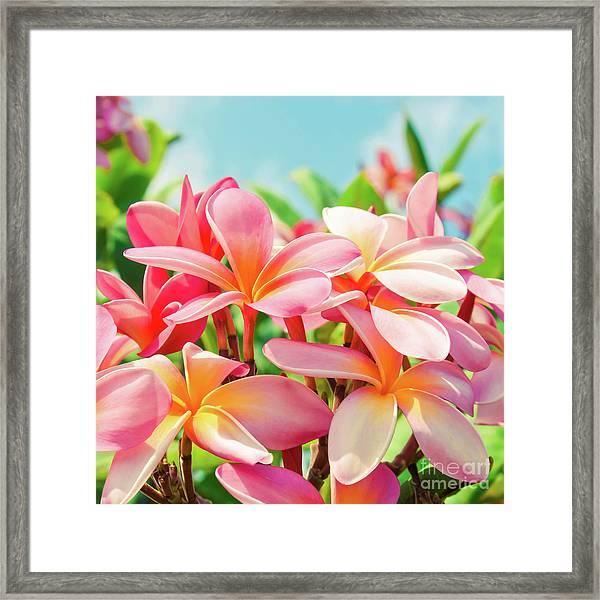 Pua Melia Ke Aloha Maui Framed Print