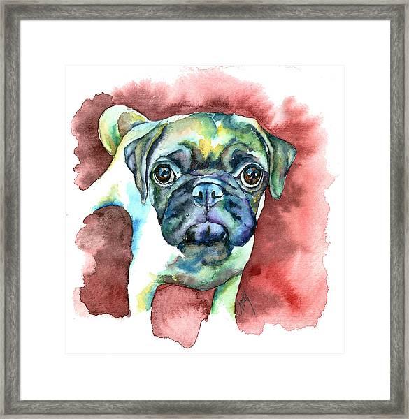 Pug In Red Framed Print