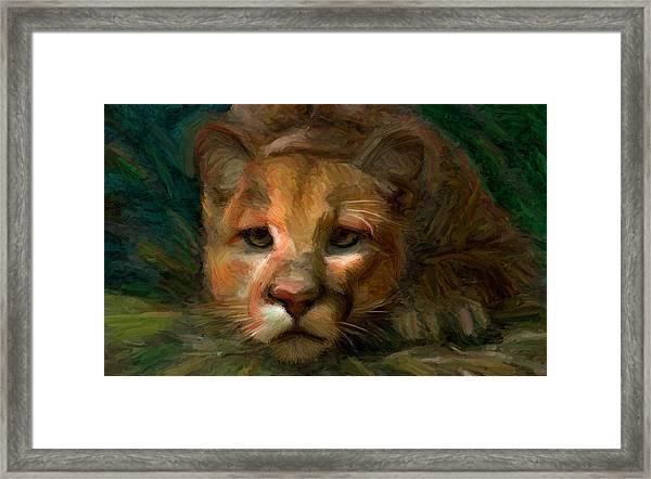 Puma 1 Framed Print