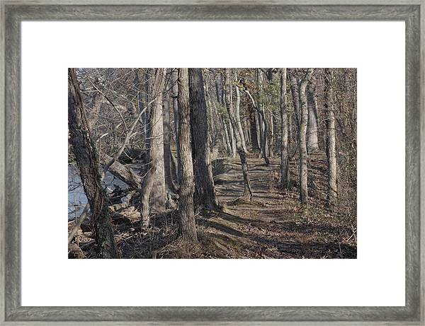Pumpkin Ash Trail Framed Print