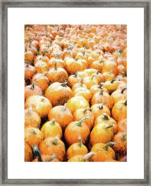 Pumpkin Collection Framed Print