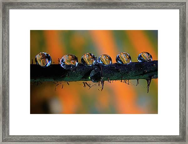 Pumpkin Drops Framed Print