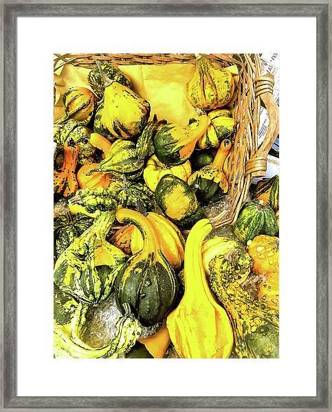 Pumpkin Family Framed Print