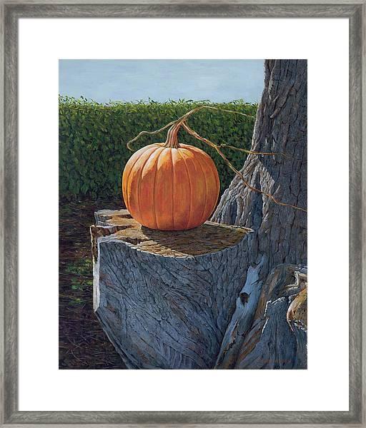 Pumpkin On A Dead Willow Framed Print