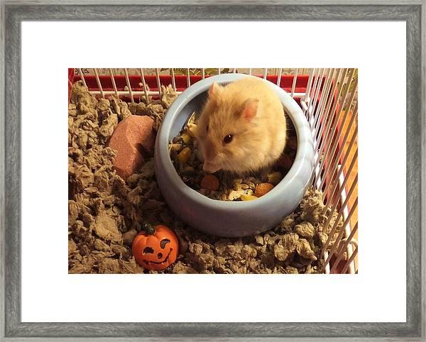 Pumpkin With Pumpkin Framed Print