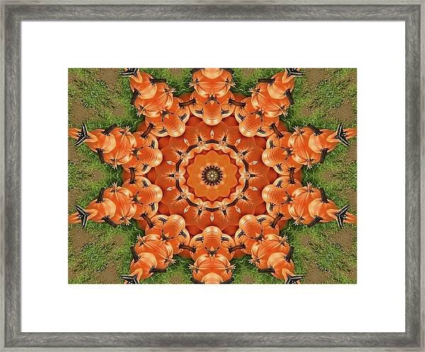 Pumpkins Galore Framed Print