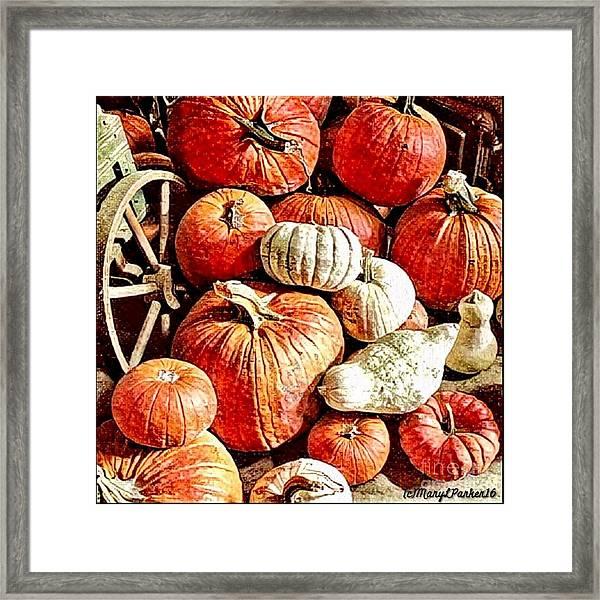 Pumpkins In The Barn Framed Print