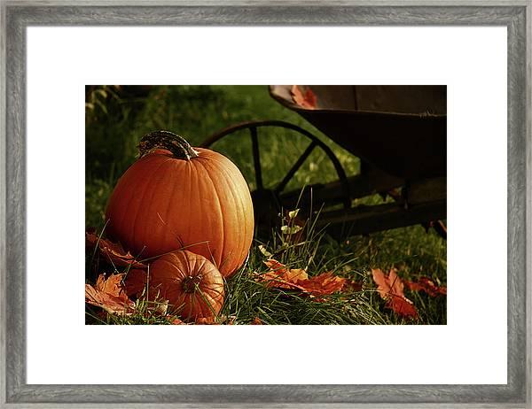 Pumpkins In The Grass Framed Print