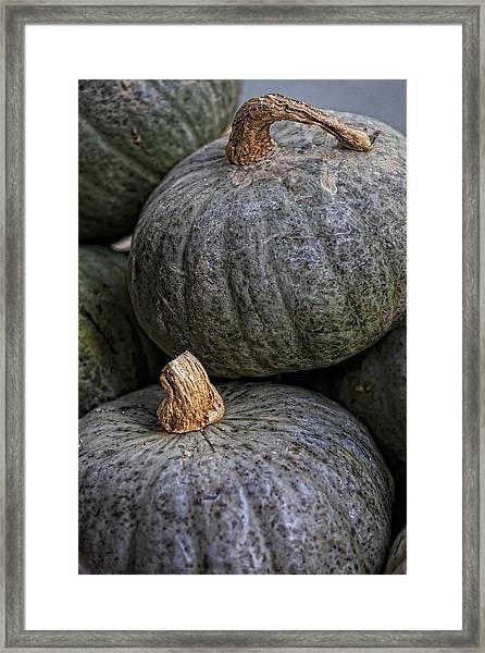Pumpkins Of Another Color Framed Print