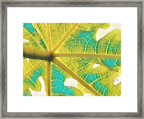 Puna Papaya Leaf Framed Print