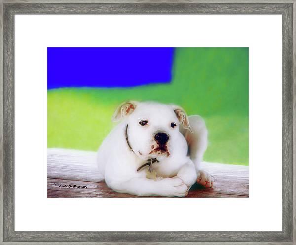 Puppy Art 2 Framed Print