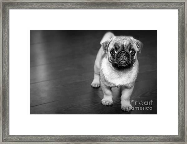 Puppy - Monochrome 2 Framed Print