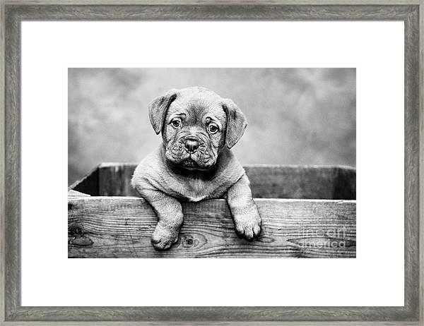 Puppy - Monochrome 3 Framed Print