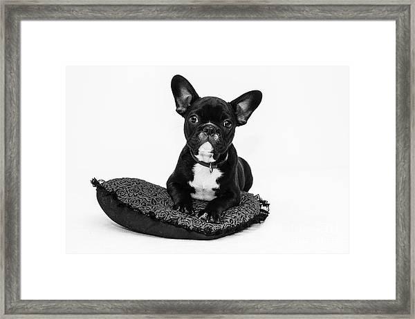 Puppy - Monochrome 5 Framed Print