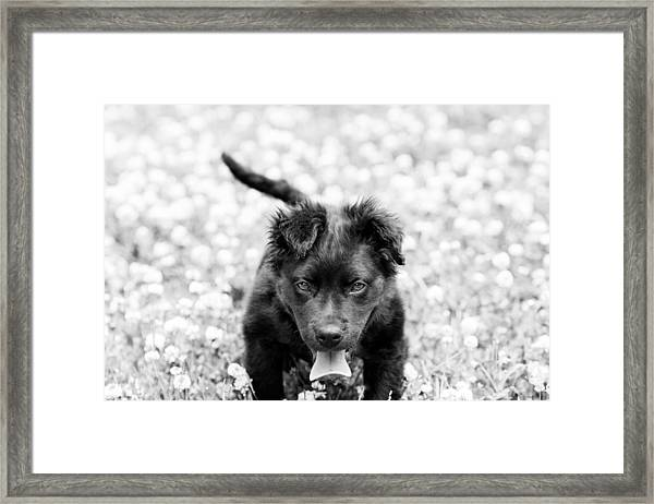 Puppy Play Framed Print