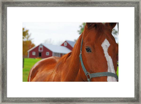 Pure Muscle Framed Print