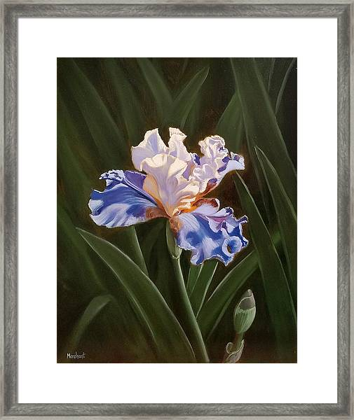 Purple And White Iris Framed Print