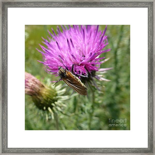 Purple Dandelions 1 Framed Print