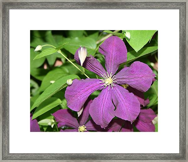 Purple Delite Framed Print