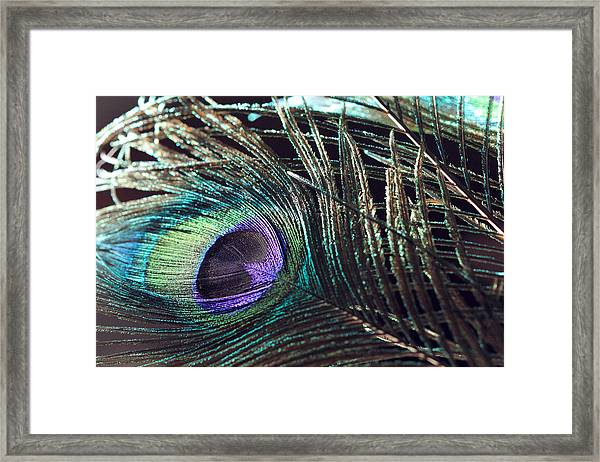 Purple Feather With Dark Background Framed Print