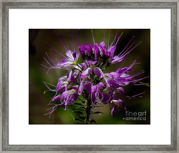 Purple Flower 1 Framed Print