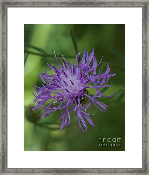 Purple Flower 8 Framed Print