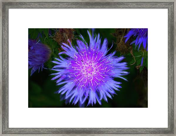 Purple Flower From Mars Framed Print