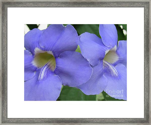 Purple Flower Picture Perfect Framed Print