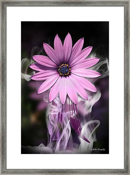 Purple Flower With Smoke Framed Print