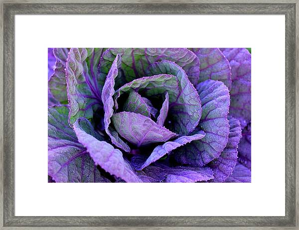 Purple Frost Framed Print