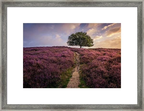 Purple Hill Framed Print