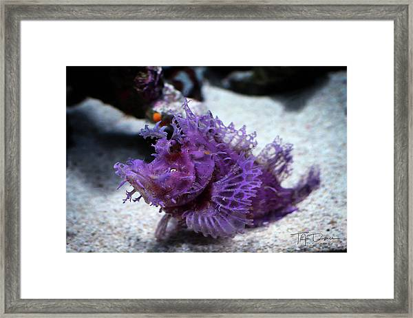 Purple Lace Framed Print