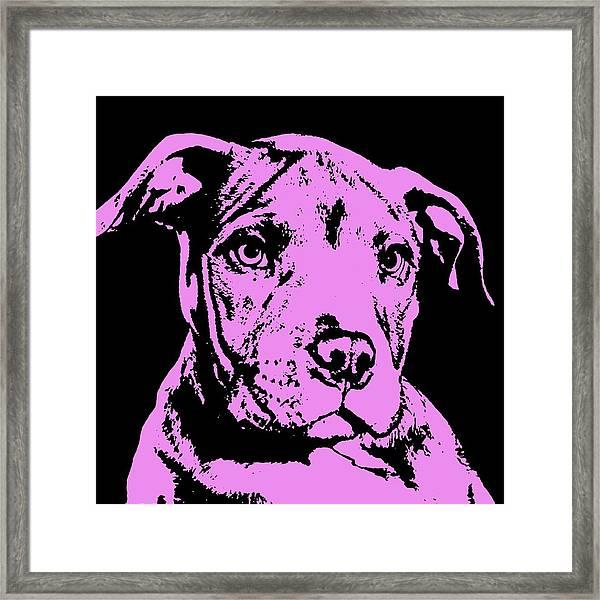 Purple Little Pittie Framed Print