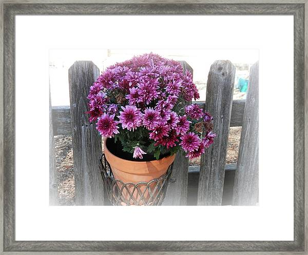 Purple On The Fence Framed Print