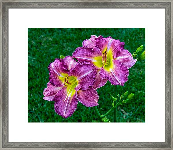 Purple Pair Framed Print