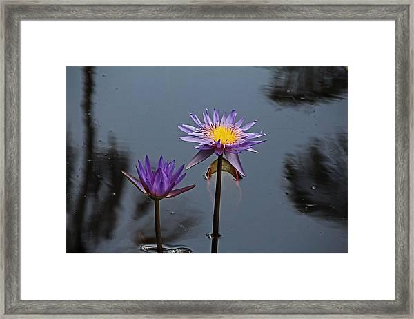 Purple Two-step Framed Print
