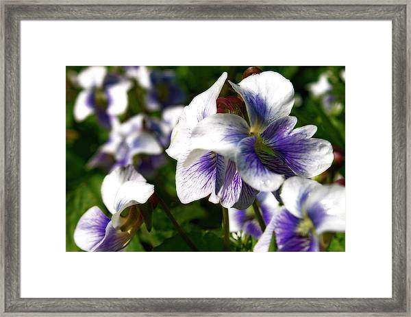 Purple Veins  Framed Print