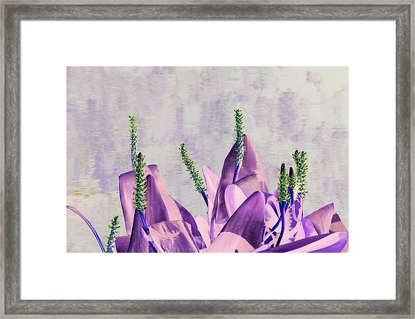 Purple Water Plant Framed Print