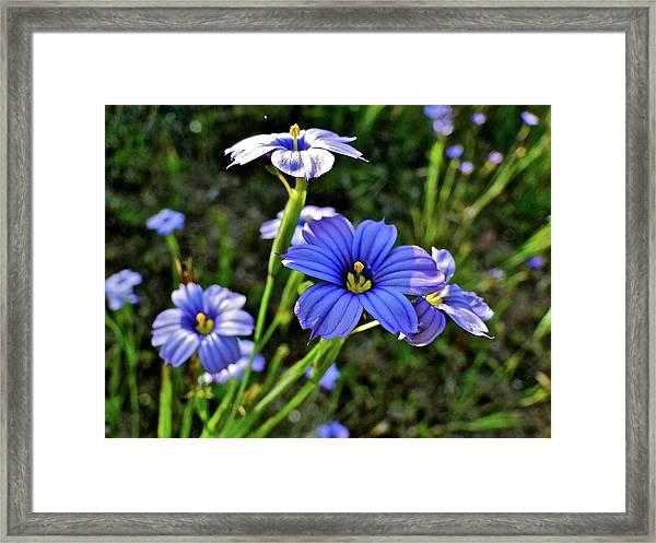 Purple Wildflowers Framed Print by Liz Vernand