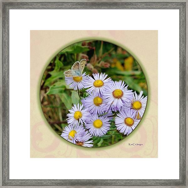 Purplish Copper On Wild Asters Framed Print
