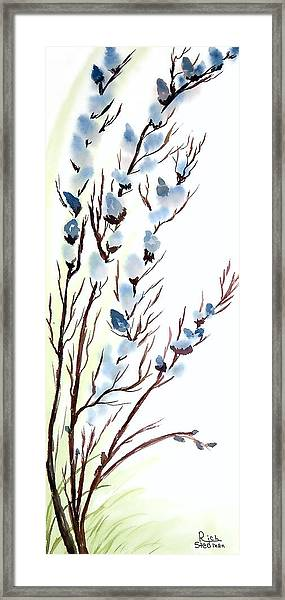 Pussy Willows In Spring Framed Print