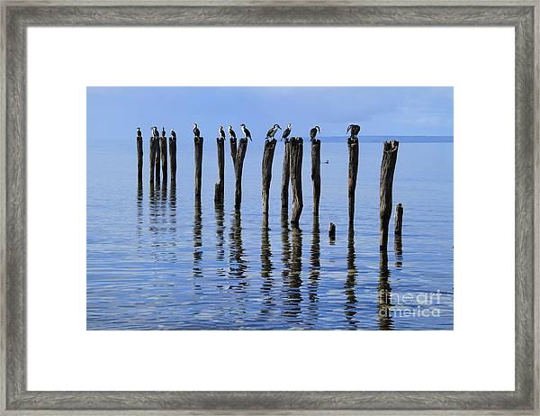Quay Rest Framed Print