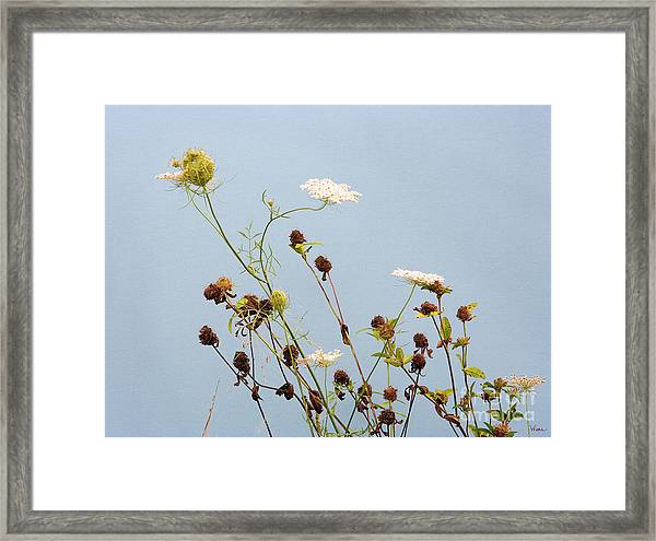 Queen Anne's Lace And Dried Clovers Framed Print