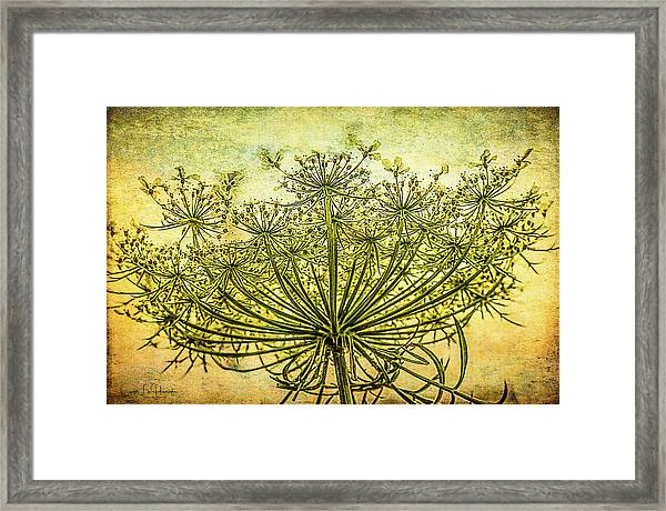 Queen Anne's Lace At Sunrise Framed Print