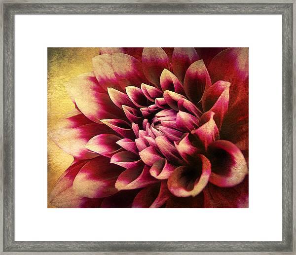 Queen Dahlia Framed Print