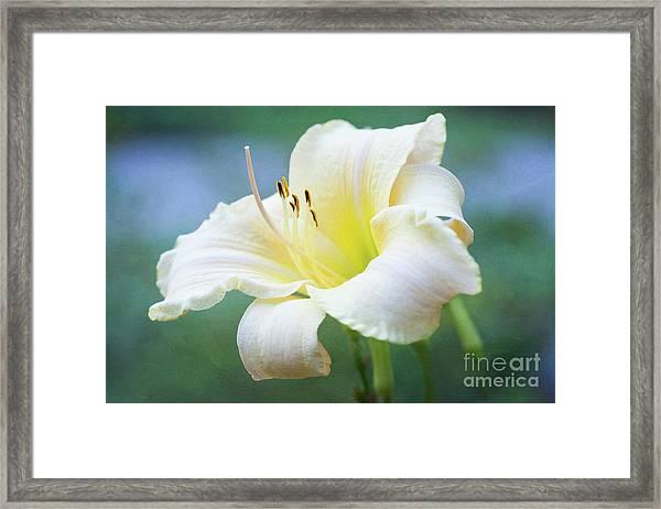 Queen Of The Garden Framed Print