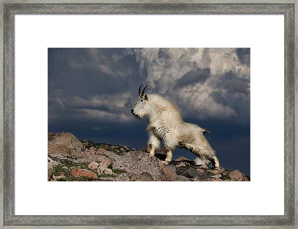 Queen Of The Mountain Framed Print