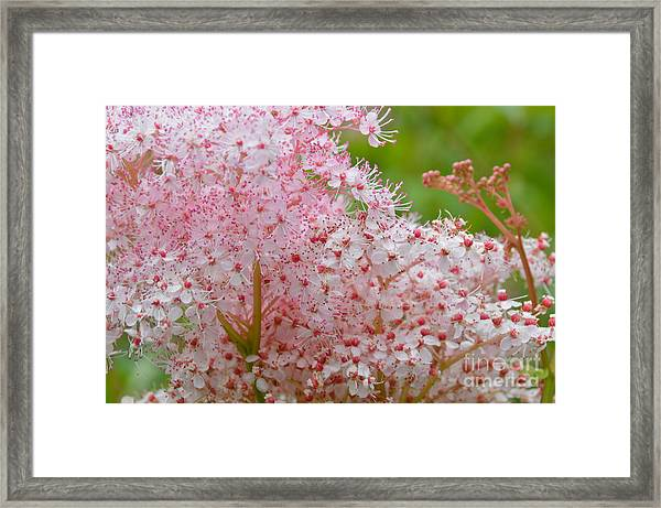 Queen Of The Prairie Nature Art Framed Print
